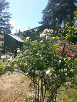 Cowichan bay cottage for sale $319900