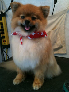 Twisted Whiskers Small Dog Grooming