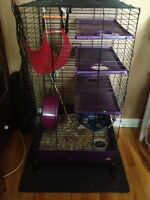 Chinchilla 7 Months Old & Cage