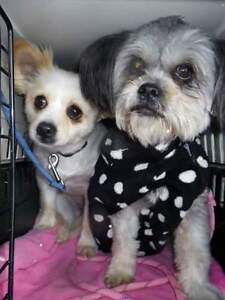 Bonded Mother and Daughter~Bella and Baby**ADOPTION PENDING**