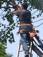 Tree removal, Silviculture work, stump grinding/wood chipping