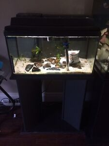 20 gallon fish tank comes with everything!