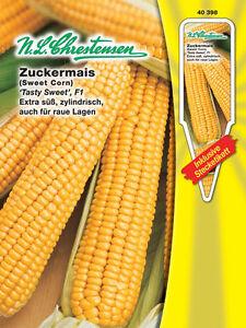 Zuckermais 'Tasty Sweet' F1 - Zea mays convar. saccharata Mais Maissamen 40398