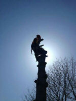 St Lawrence Tree Service- Professional Work Done For Low Prices!