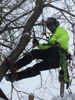 The Tree Whisperer - Professional, Reliable, Safe Tree Removal
