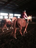**RIDING LESSONS/TRAINING AVAILABLE**
