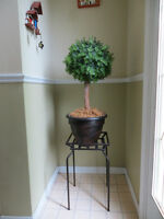 Plant with Clay Pot and Plant Stand