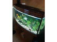 Fish Tank Aquarium £150 fish included