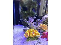 Marine Fish for sale!!