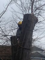 TREE TRIMMING AND TREE REMOVALS DONE PROFESSIONALLY SAFE!