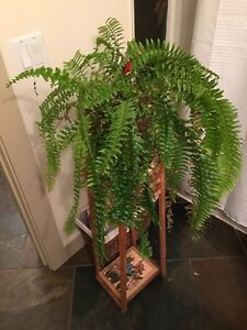 Fern with Wooden stand