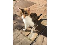 ***** URGENT ***** 2 sister cats in need of good, loving home
