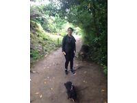 Dog Walker / Petsitter