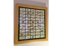 Framed picture cards of fish/ marine life