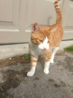 CATS found /sighting VIEW -VISIT PAGE