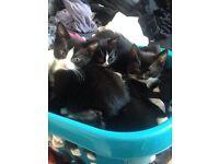 Kittens 9 weeks old