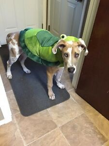 Turtle costume size medium