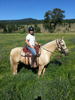 Registered 1/2 Arab palomino mare
