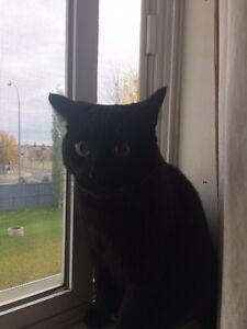 Black kitty looking for new home.