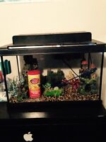Fish tank and excessories
