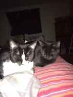 Two adorable female kitties looking for a forever home