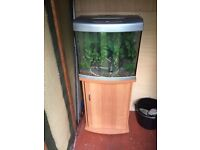 65 litre fish tank with unit full set up