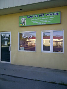 CAMP K9 PET DAYCARE + GROOMING