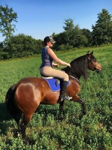 6 year old sport horse for lease