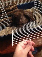 Sweet little lop-earred bunny looking for a good home