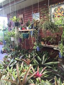 Cactus, Succulents, Assorted Hanging Baskets Stirling Stirling Area Preview