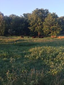 Looking for pasture land to rent or buy Stratford Kitchener Area image 1