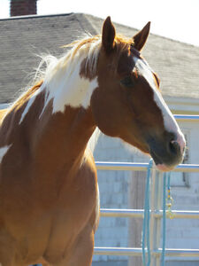 HORSE FOR ON PROPERTY LEASE