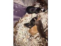 5 friendly mice