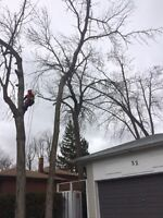 Timberwolf Tree Cuts: Tree Removal and Pruning