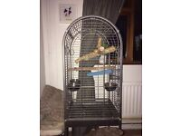 Large parrot cage with toys and bowls