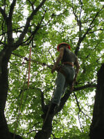 Tree Care - Arborist Services - ISA Certified