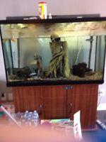 grosse aquarium toute inclus poisson aussi