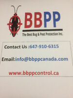 Mouse Control Services in Brampton & Mississauga at Lowest Price