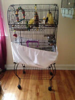 Love Birds and cage