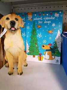 Dog Treat Christmas Advent Calendars Wattle Grove Kalamunda Area Preview