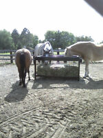 Horse Slow Hay Feeder For Sale