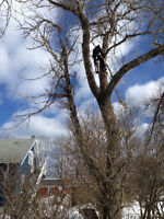 Tree Removal & Wood lot Consulting