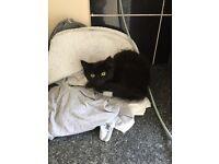 Black Cat for sale.