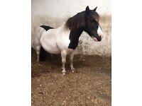 Kids pony/companion