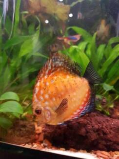 4 discus for $160