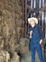 Organic Hay for Sale