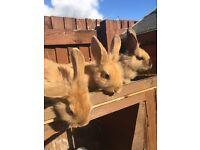 3 baby bunnies