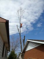 Over the Top Tree Service (Tree Removal/Pruning)