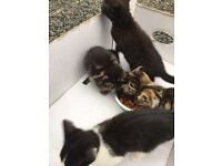 4 Beautiful Cats for Sale