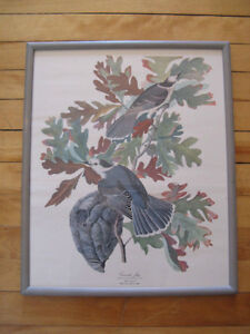 Vintage Canada Jay Print and Frame $5